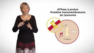MOOC côté cours : Les lysosomes