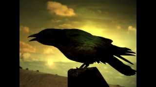 Чёрный Ворон - песня(черный ворон народная песня в минимальной современной обработке, текст песни немного искажён Это сырой..., 2012-07-15T04:13:56.000Z)