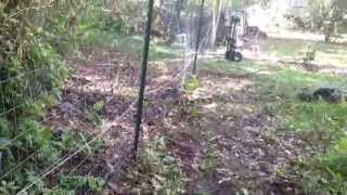 Building A Farm Fence Hybrid With Chain Link Gates Diy
