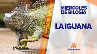 Miercoles de Biología - La Iguana thumbnail