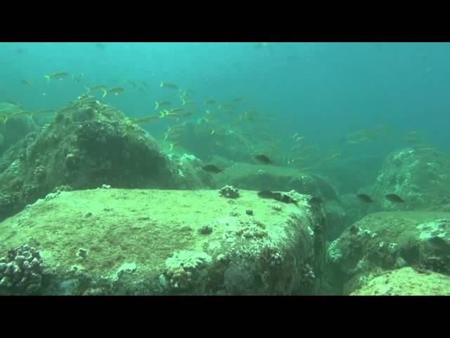 Oahu Dive Sites - Waimea