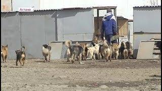 Бездомные животные в Астане: во дворах обитают целые стаи кошек и собак  (06.04.18)
