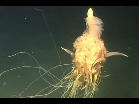 "Sea ""alien"" spotted off the coast of Angola"