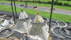 Solar Pyramids vs Gro-Therm Hoop Cloches