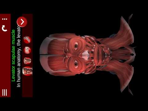 Muscular System 3D (anatomy) - Apps on Google Play