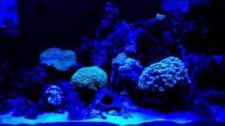 led aquarium light blue light