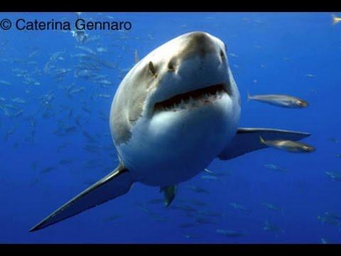 Caterina Gennaro - Underwater Film, Photography, & On-Camera Talent