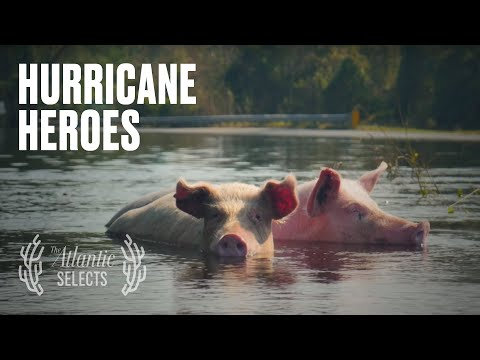 Millions of Animals Die in Hurricanes. This Couple Rescues Them.