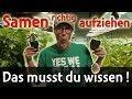 Vom Samen Zur Pflanze - So Wirds Gemacht ¦ Interview Mit Herzog (Herz OG) + Gewinnspiel