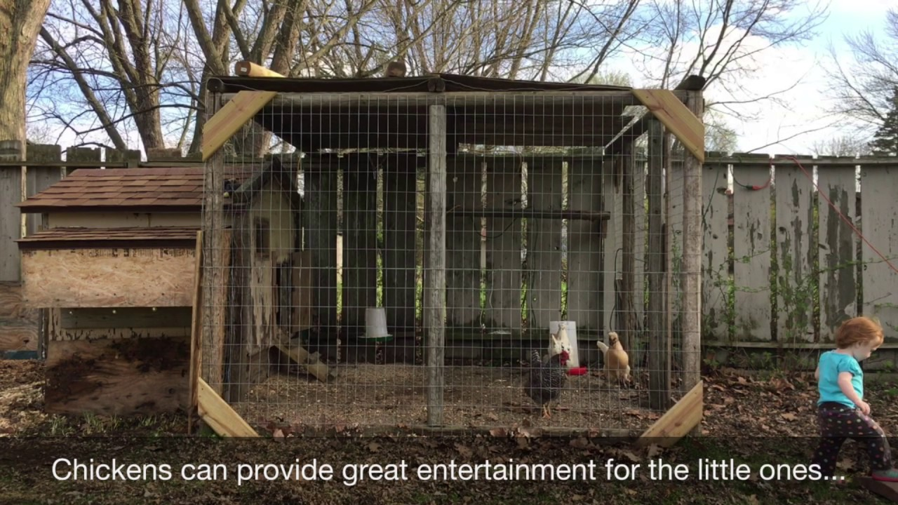 raising chickens in your backyard youtube
