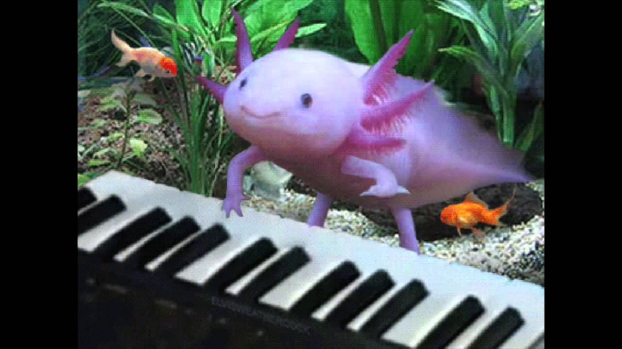 Keyboard Axolotl 2 Youtube