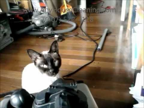 unneutered male cat meowing
