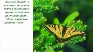 YouTube - Урок бабочки. Как добиться Успеха!.flv