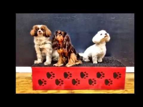 Circus School for Dogs - Chicago Dog Training