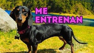 ENTRENANDO A ARIA Y KLER | LOS POLINESIOS VLOGS