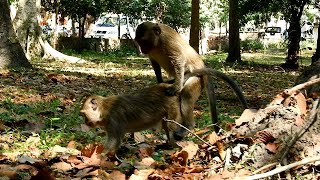 MG .... What that mating monkey  !!!!