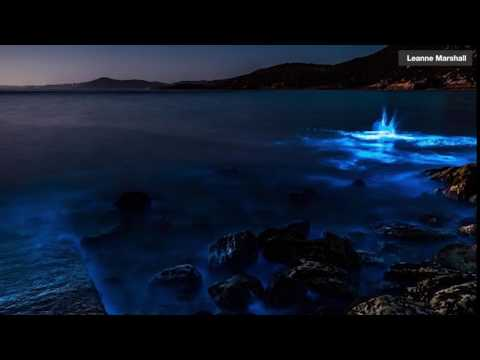 Tasmania Beach Glows Blue Due to Bioluminescent Algae (Photos)