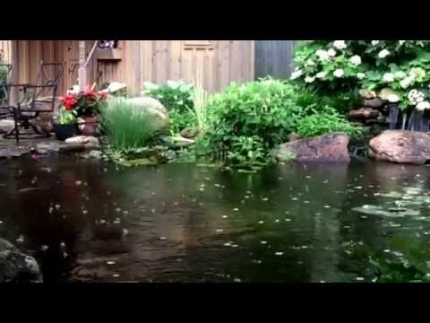 The koi pond on a stormy morning in york pa youtube for Koi pond york