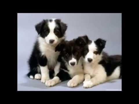 Musique calme plus photos de b b chien youtube - Image bebe chien ...