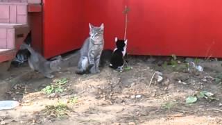 Котята на Парина в Казани
