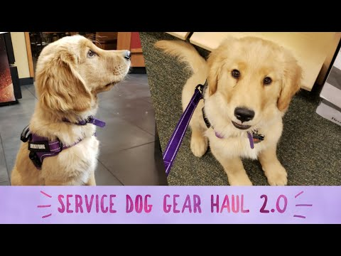 Service Dog Video | #4 | Service Dog Gear Haul 2.0