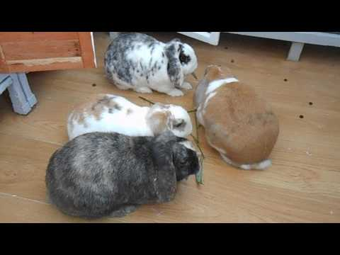 the buns and forage