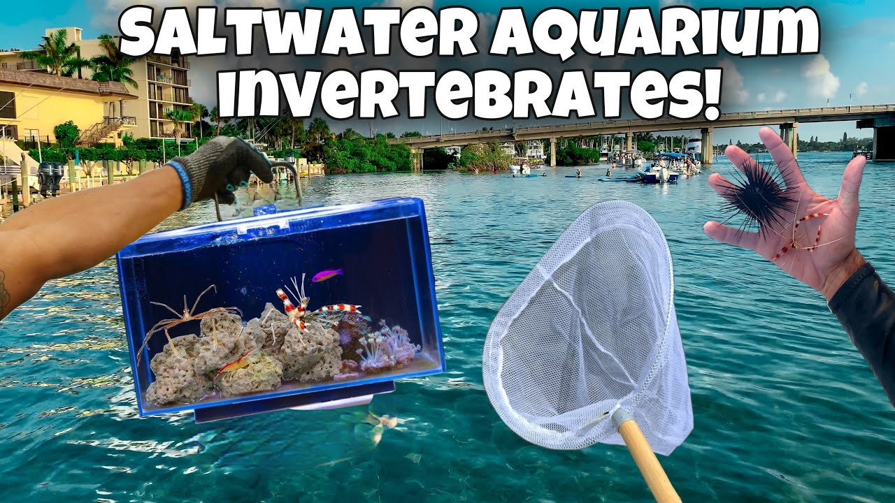 Catching AQUARIUM INVERTEBRATES For My AQUARIUM !! *Crazy*