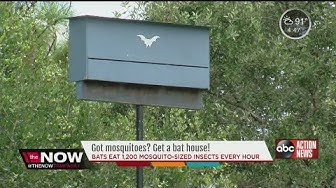 Got Mosquitoes? Get a bat house!