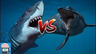Megalodon vs Mosasaurus - wer würde den Kampf gewinnen? I Wissensautomat