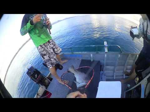 Noosa Offshore 2