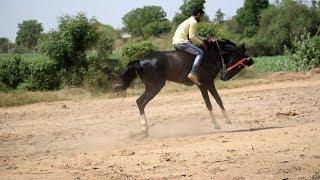 यह देखो फर्स्ट टाइम घोड़े की सवारी Watch This First Time Horse Ride