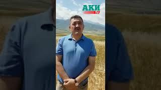 Албек Ибраимов. Реакция на решение БГК