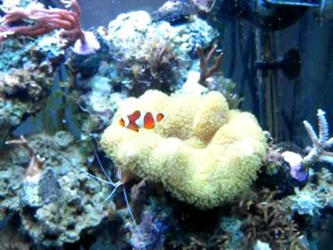 aquarium r 233 cifal eau de mer juwel lido 120l 6mois