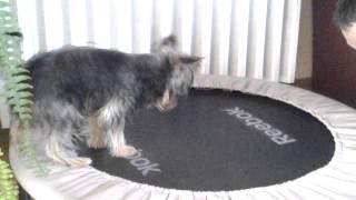 York na trampolinie