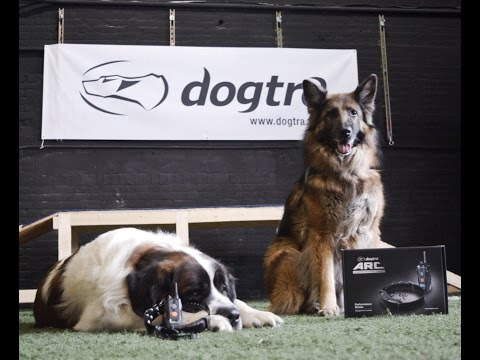 Dogtra ARC review with America's Canine Educator
