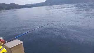 3月24日天気は良かったけど 潮が小潮で悪く 残念な釣果でしたぁ   最...