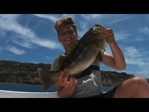 Fishing Palos Verdes KELP FOREST For BIG CALICO BASS