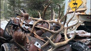 A Week in the Wilderness - Elk hunting - Limitless 67