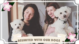 Reunion With Our Dogs After 8 Weeks // Ep 8 //Traveling With A Chronic Illness//Malaysia Travel Vlog