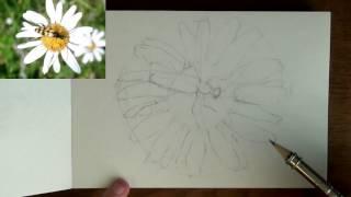 Как нарисовать жука простым карандашом