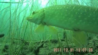 Подводные �ъемки