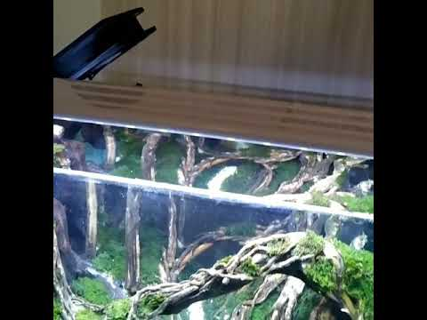 Aquacape tema hutan - YouTube