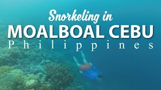 MOALBOAL CEBU Philippines (SNORKELING)