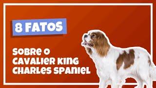 8 CURIOSIDADES SOBRE O CAVALIER KING CHARLES SPANIEL  Cinobras TV  Tudo sobre Cinofilia.