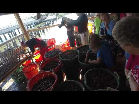 Sothern Cross Sea Farms Tour - Part 6 Tumbling
