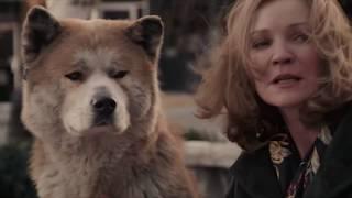 5 Самых Верных Собак В Истории [Белый Кот]