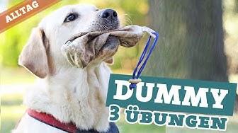 Dummytraining Hund   3 Übungen Hundebeschäftigung   Dummy apportieren Labrador Hundekanal