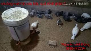 #Làmgiầutừquê chuồng nuôi bồ câu hiệu quả nhất phần 2