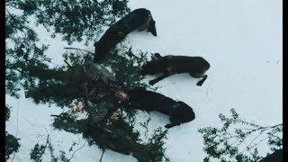 飞机坠落在冰天雪地的荒原中,人类面对狼群的追捕能否逃出生天