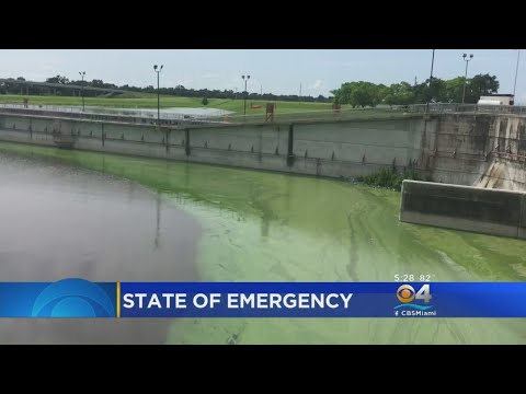 Algae Causes U.S. Army Corps Of Engineers To Suspend Lake Okeechobee Water Discharges